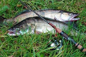Улов рыбы на спининг